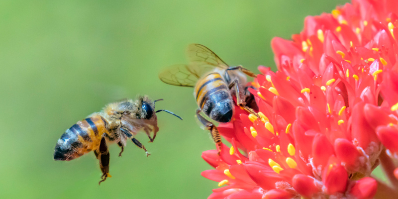 African Bee Extermination in Lakeland, Florida