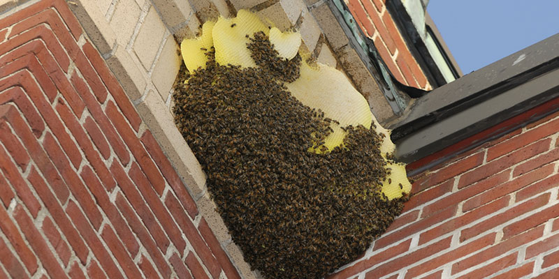 prevent bee swarms from entering your home